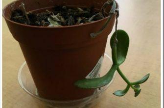 Чтобы подарить растению вторую жизнь, нужны лишь спички
