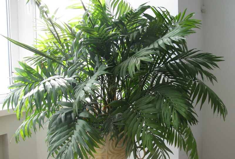 Семь лучших растений для очистки воздуха внутри помещения