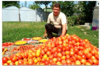 Волшебный бальзам для роста помидоров от садовода-огородника