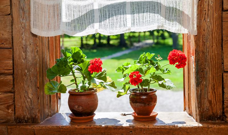 Нашла растения, что цветут в комнате круглый год! Это праздник, девочки!