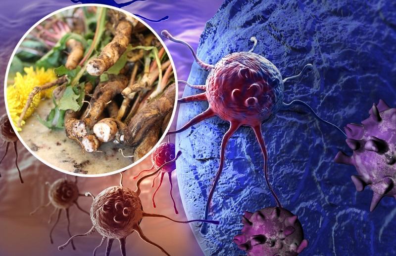В 100 раз эффективнее химиотерапии! Трава, которая убивает раковые клетки в течение 48 часов.