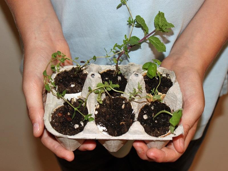 Лунки для посева: морковь, лук, редиска взойдут через неделю! Для быстрой разметки грядок…