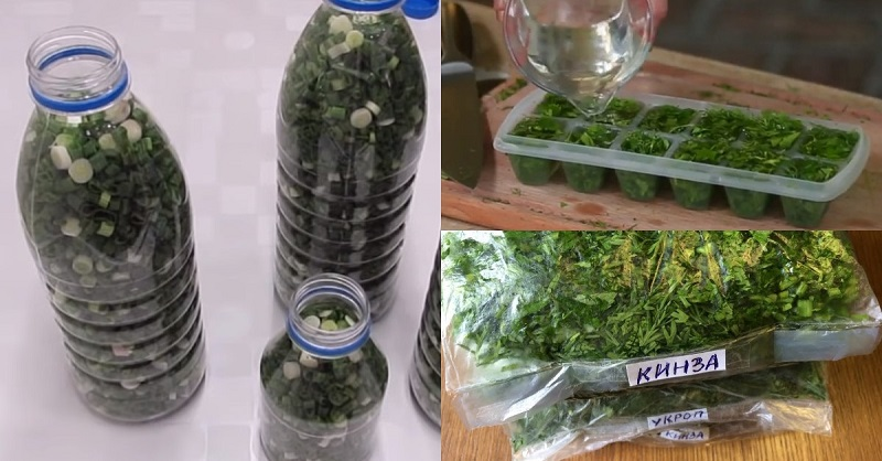 Чтобы не покупать зелень зимой: даже зеленый лук замораживаю, не трачу лишнего в январе