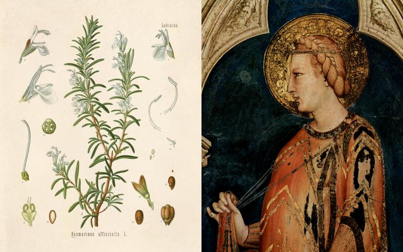 Трава, сжигающая жир: бодрит ум и тело, формирует талию и плоский живот