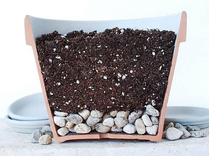 Как легко и без хлопот вырастить лавровый лист