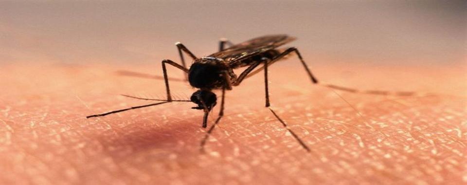Комары не оставляют вас в покое? Существует средство, которое лучше, чем токсичные репелленты!