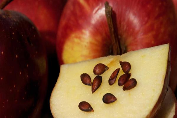 4 вида семян с большей антиканцерогенной силой. Вы будете удивлены!