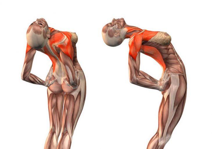 Упражнения которые улучшают кровоснабжение мозга, выпрямляют позвоночник, освободят сосуды от зажимов