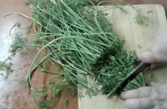 Не выкидывайте стебли укропа. Из них можно сделать кое-что очень вкусное