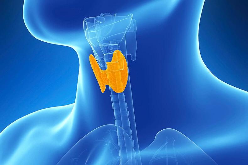 Щитовидная железа:Как и чем восполнить недостаток йода в организме
