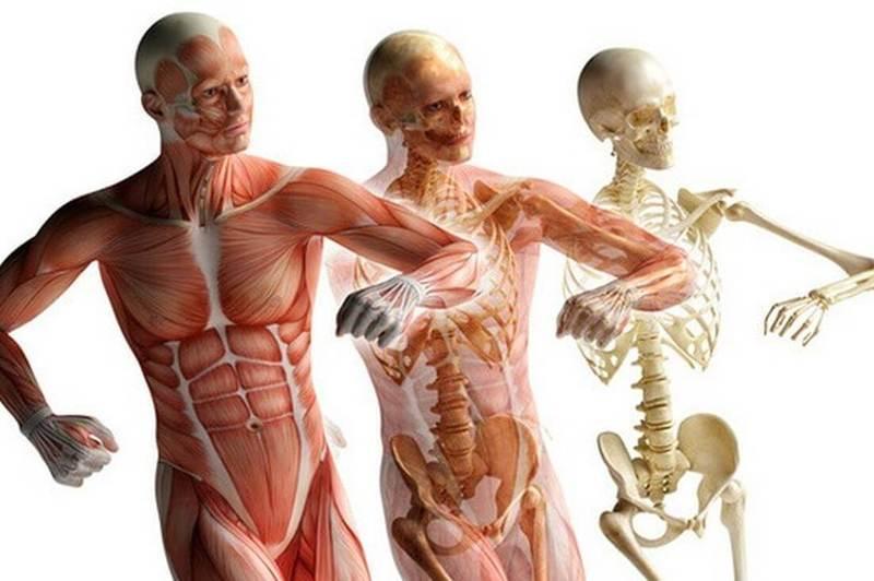 7 причин, почему важно следить за состоянием фасциальной ткани