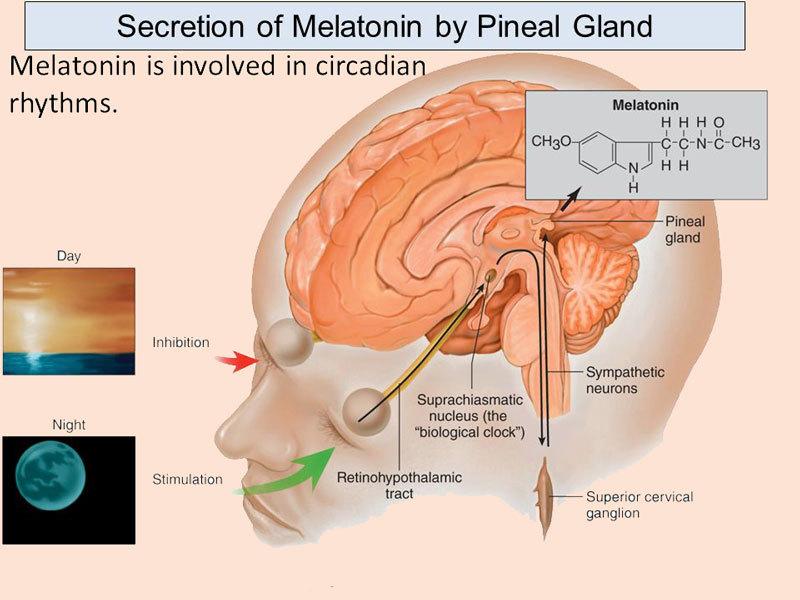 Мелатонин: При депрессии, аутоиммунных заболеваниях и раке